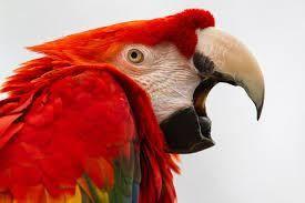 翻訳記事4:クイックガイド:鳥の雄叫び問題を上手に解決 by Pamela Clark