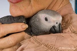 releasingpetbirds1.jpg