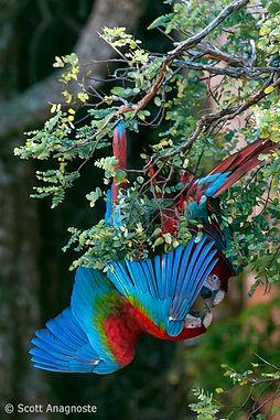 releasingpetbirds2.jpg