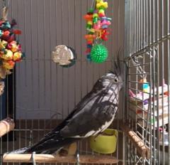鳥さんの日光浴