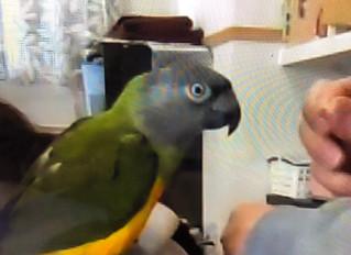 鳥さんに学ぶ:トレーニングのポイント1【ボディランゲージ】
