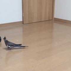 鳥さんとお引越し【お引越し前の準備】