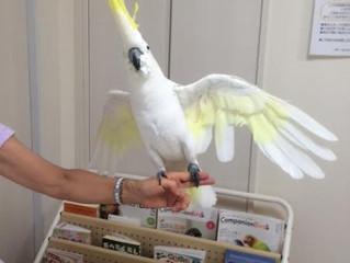 鳥さんの雄叫びに関して補足:ご相談事例をヒントに