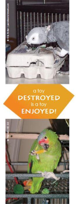 Parrot that chews2.jpg