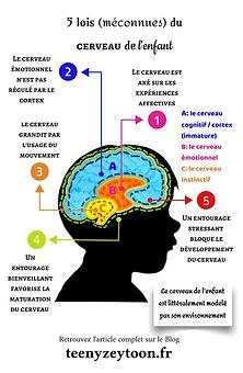 le cerveau de l'enfant.jpg