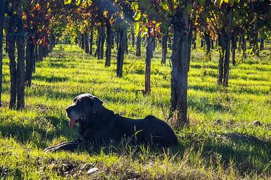 TorreAOriente Wingert mit Hund.jpg