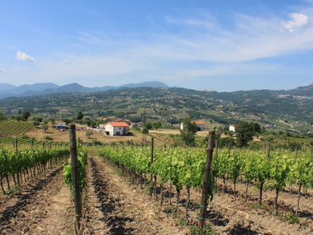 Luigi Tecce - der besondere Weinmacher