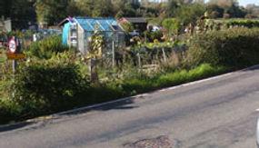 cappell-lane-hedge.jpg