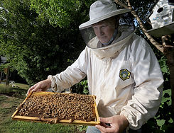 Stephen is a beekeeper and first became
