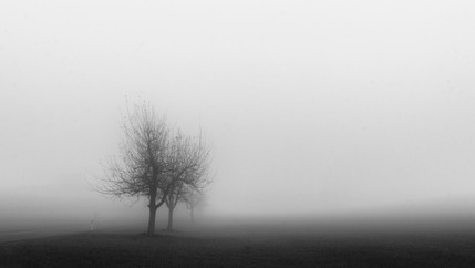Baum im Nebel.jpg