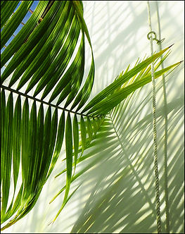 Leaning Palm by Rita Simmonds.jpg