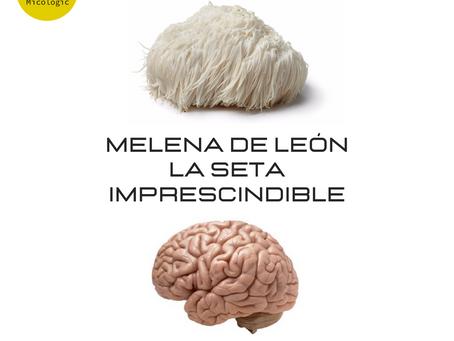 MELENA DE LEÓN, LA SETA IMPRESCINDIBLE