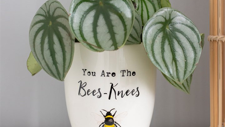 Bees Knees Plant Pot