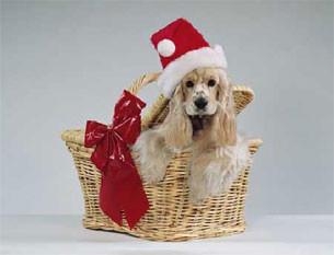 Сердечно поздравляем Вас с Новым 2006 Годом и Рождеством!