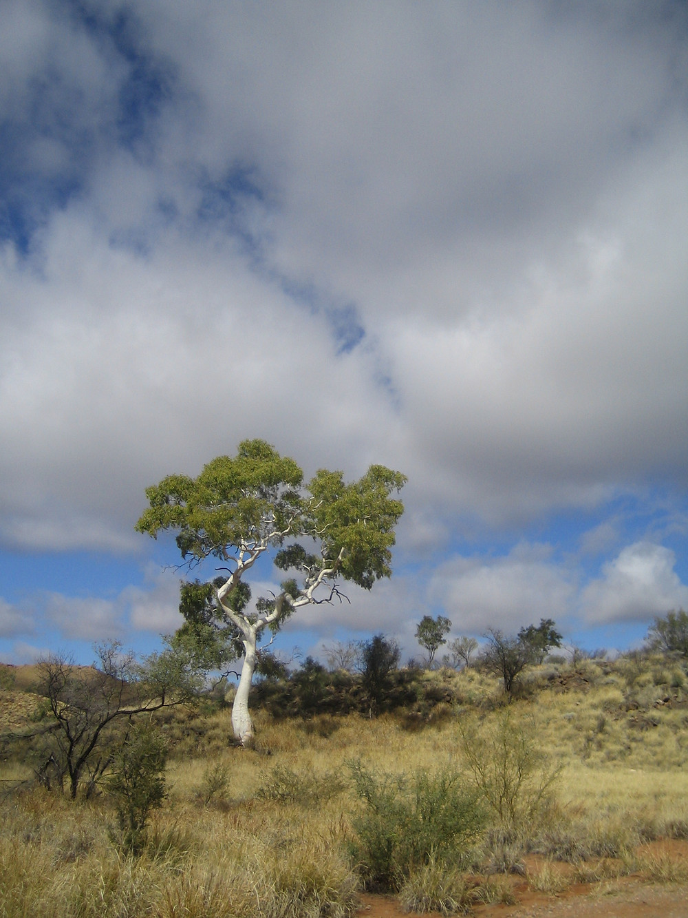 Writing in Queensland