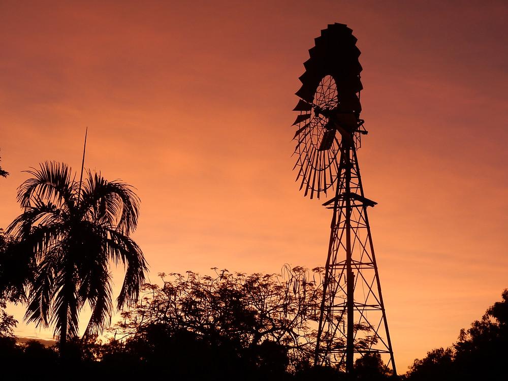 The Queensland Bush