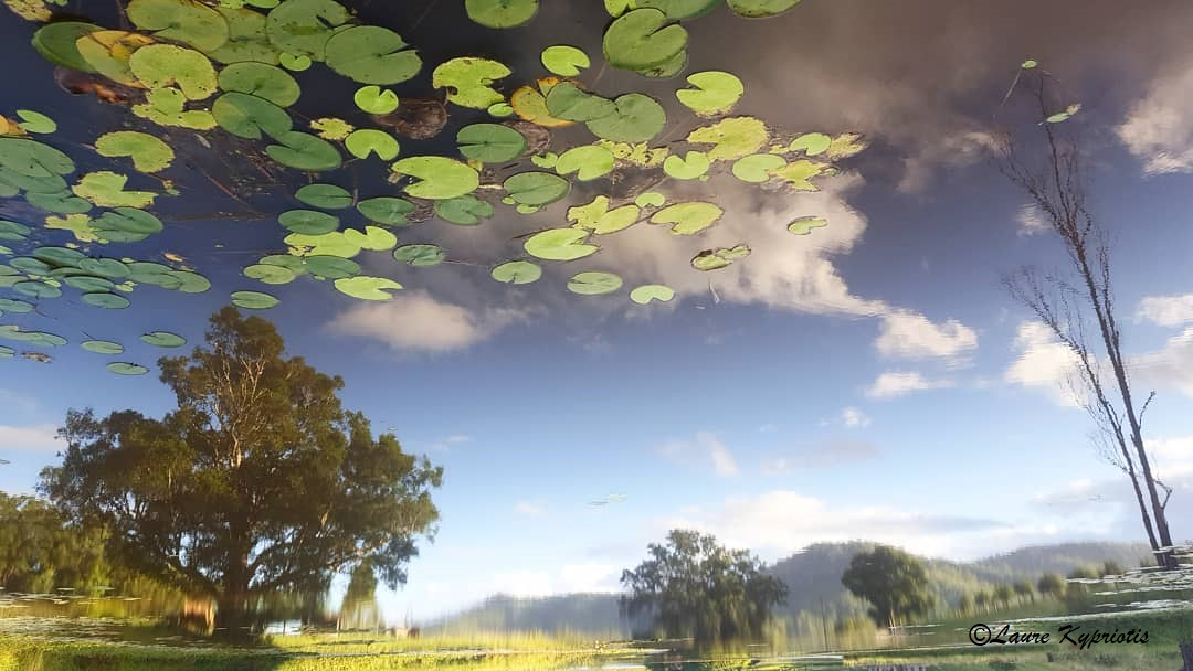 Waterlilies in the sky