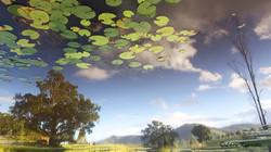 Waterlilies in the sky