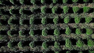 garden_bg.jpg