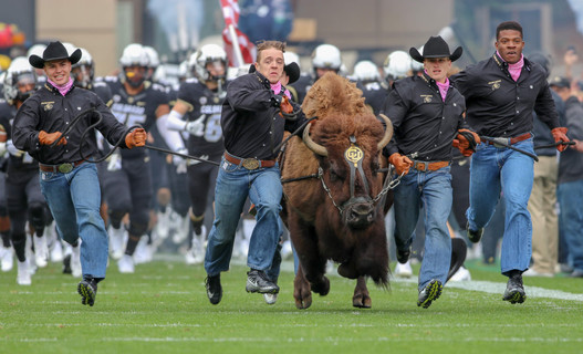 Ralphie the Buffalo.jpg