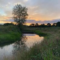 Oregon summer evenings.jpg