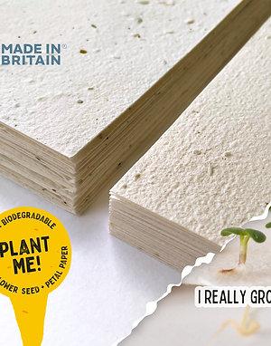 Plantable Wildflower Seed Paper