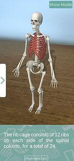 skeleton_ribs.jpg