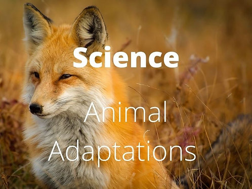 Science - Animal Adaptations