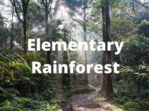Elementary - Amazon Rainforest