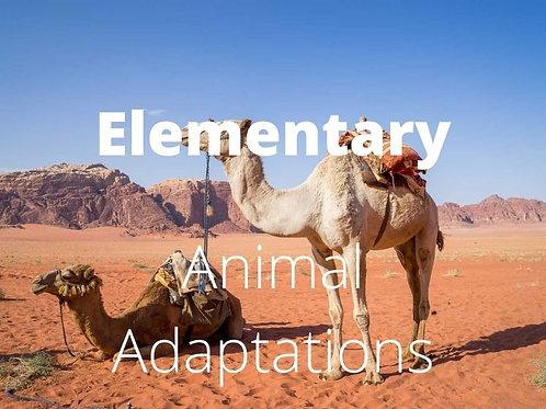 Elementary - Animal Adaptations