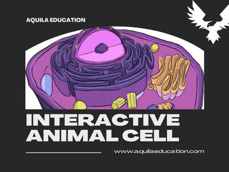Interactive Animal Cell