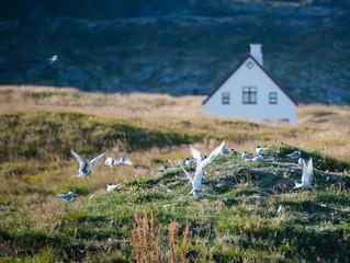 Fræðsluverkefni í Svæðisgarðinum