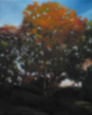 northfork painting fall tree oil