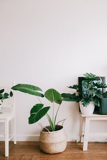 green-plant-on-white-wooden-table-364474
