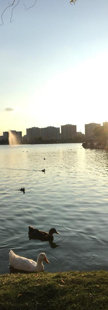 Gölün İncileri