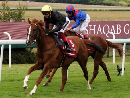 'Brilliant' Stradivarius primed as he chases record fifth Goodwood Cup