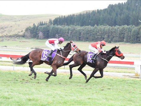 Tappy's One continues winning streak with Oamaru Cup victory