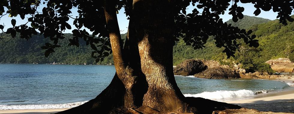 Natureza da Praia do Meio.