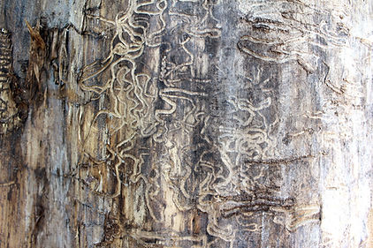 the-termitesstrike-again.jpg