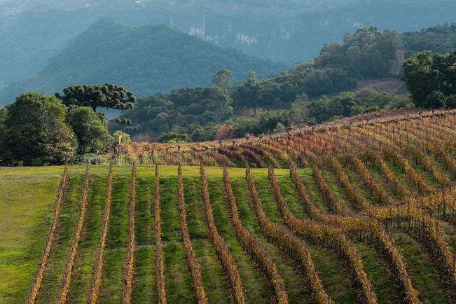 Miolo winery estate