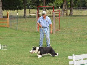 Bill Coburn trains border collies, at Windy Knolls Farm in Laurens County