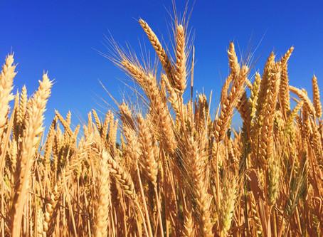 Laurens County Women Bridge the Agriculture Gap