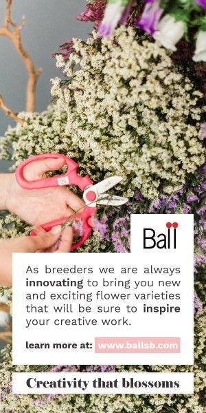 BallBanner.jpg