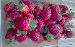 No Pesticides, Herbicides, or Fertilizer