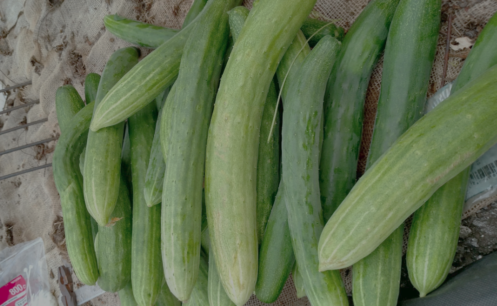 Cucumbers from the Greenhouse