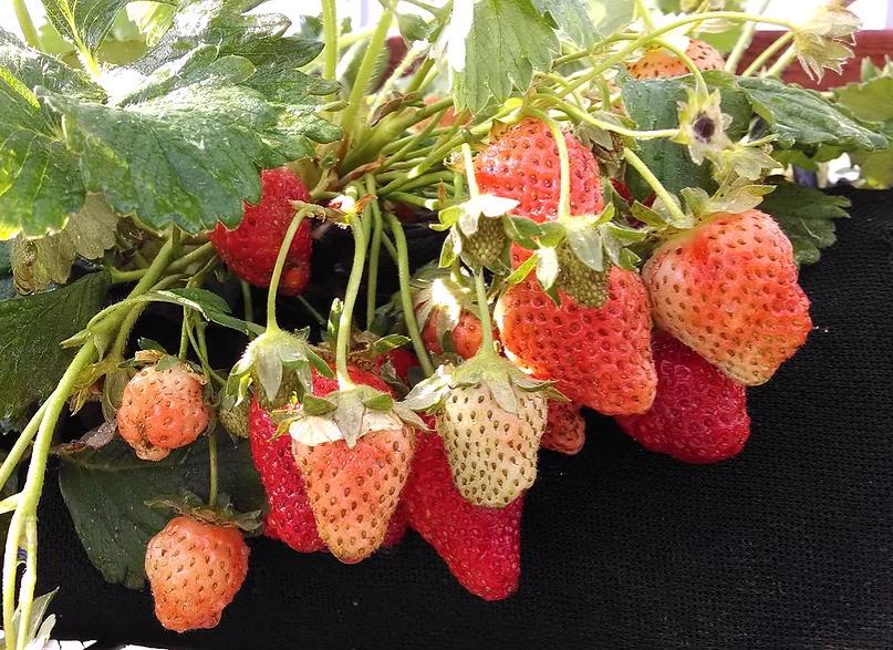 Overloaded Fruit