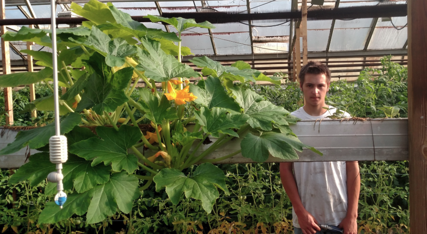 Growing Squash in the Greenhouse