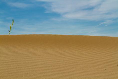 Sol al desert