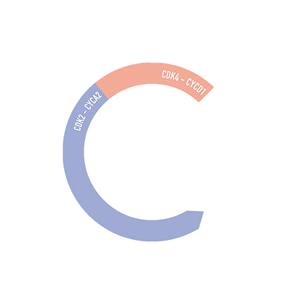 C1-Centered.png