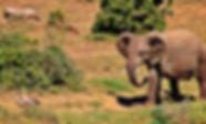 T4tw Free 1 baby elephant-birds1228733_1